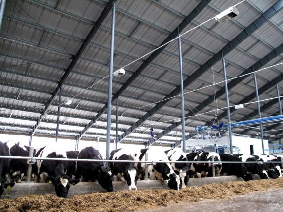 Ангары BORGA для животноводства